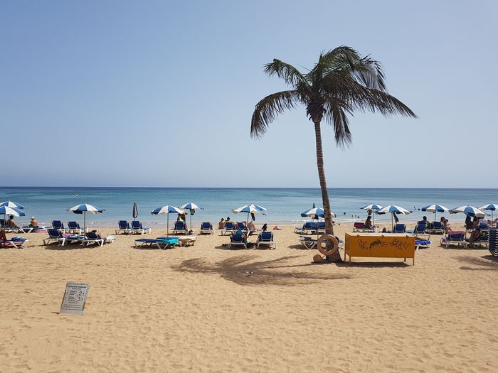 Relax Palm Destination Tourism Summer Canary Islands Island Lanzarote Arrecife Beach Beach Water Sea Sky Land Sand Horizon Over Water Beauty In Nature Nature Scenics - Nature Horizon Tranquility Tranquil Scene Umbrella Parasol Holiday Outdoors Palm Tree Coconut Palm Tree Vacations Travel Destinations