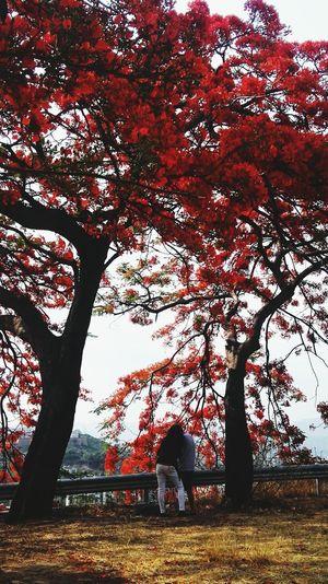 凤凰树系列3 Tree Branch Autumn Leaf Silhouette Full Length Men Tree Trunk Red Field