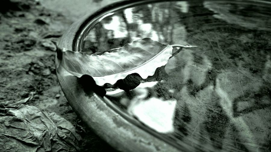 Reflection Water Close-up EyeEmNewHere Magazine Market Zeisslens Nokia808Pureview EyeEm Vision Nokia808 Indiapictures Mobile Phone Photography Mobilephoto Photosfromindia Worldwide_shot Indiaphotographer The Street Photographer - 2017 EyeEm Awards Nature EyeEm Best Shots - Nature Beauty In Nature Bokeh Photography Bokeh