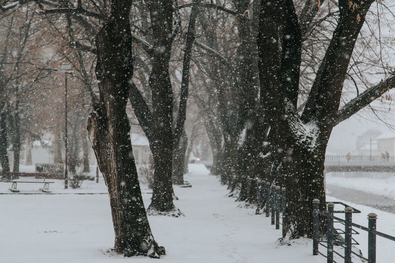 Snowing in park Tree Snow Cold Temperature Winter Snowing Bare Tree Scenics - Nature Beauty In Nature Treelined City Trees