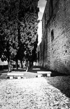 Just LearningTaking Photos Castello Di Brescia Italy🇮🇹 Eyeemphotography Blackandwhite Photography Canon Eos  No People Tall - High Park Bench Growing Tall Tree Outdoors Treelined Tranquility Perfect Thinking Place Stone Material Stone Wall History Canon Eos  New Talent.maybe?