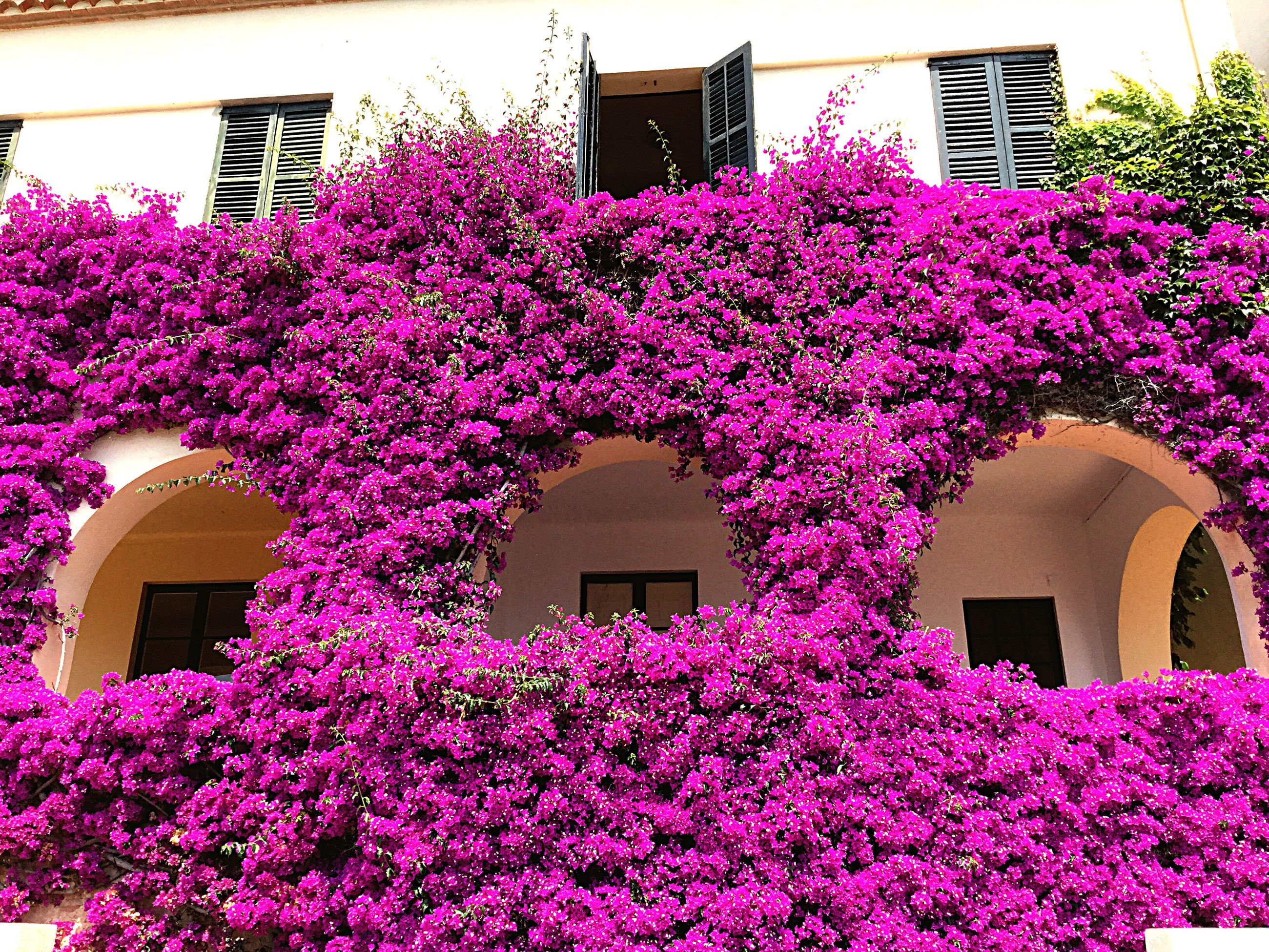 flower, building exterior, architecture, built structure, freshness, fragility, pink color, growth, tree, blossom, beauty in nature, low angle view, window, in bloom, nature, house, pink, petal, springtime, residential building