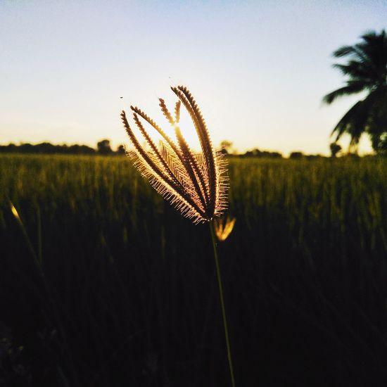 🍃 EyeEm Gallery EyeEm #flower  #Plant Plant Stem