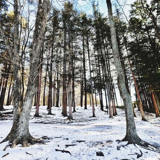 Snow Winter Cold Temperature Tree Tree Trunk Beauty In Nature Nature Weather Forest Tranquility Scenics Outdoors No People Day Landscape Tranquil Scene Sky