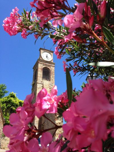 Flower Clock Growth Freshness Low Angle View Built Structure Fragility Beauty In Nature Petal Time Flower Head Day No People Tower Pink Color Nature Architecture Clock Tower Bouquet Outdoors