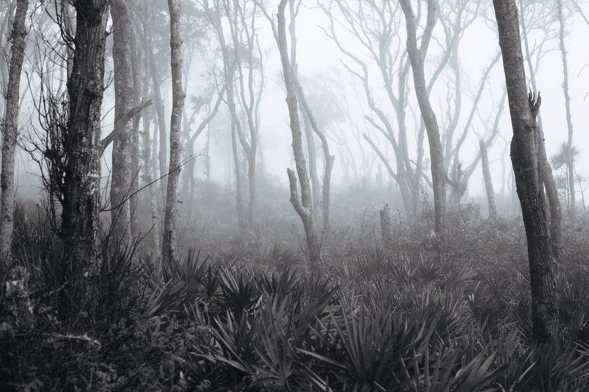 One morning along the coast of Florida. Shades Of Grey Sunrise Florida Melancholic Landscapes
