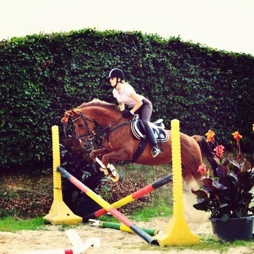 My Best Horse I Love You ! Great Jumper