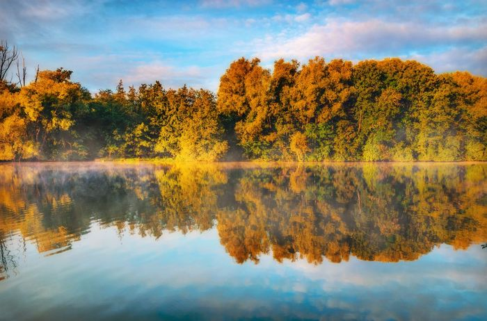 Forest reflection Reflection Water Tree Lake Waterfront Tranquility Tranquil Scene Scenics Autumn Beauty In Nature Change Growth Sky Nature Orange Color Blue Day Non-urban Scene Calm Cloud - Sky Idyllic Sunrise