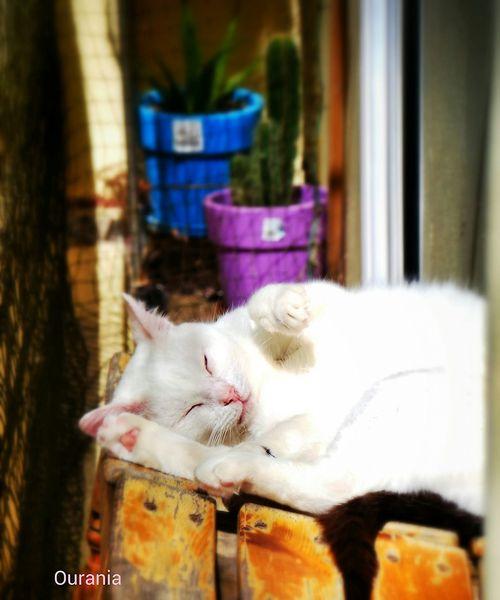 Catworld Morning Light Relaxing Sunbathing