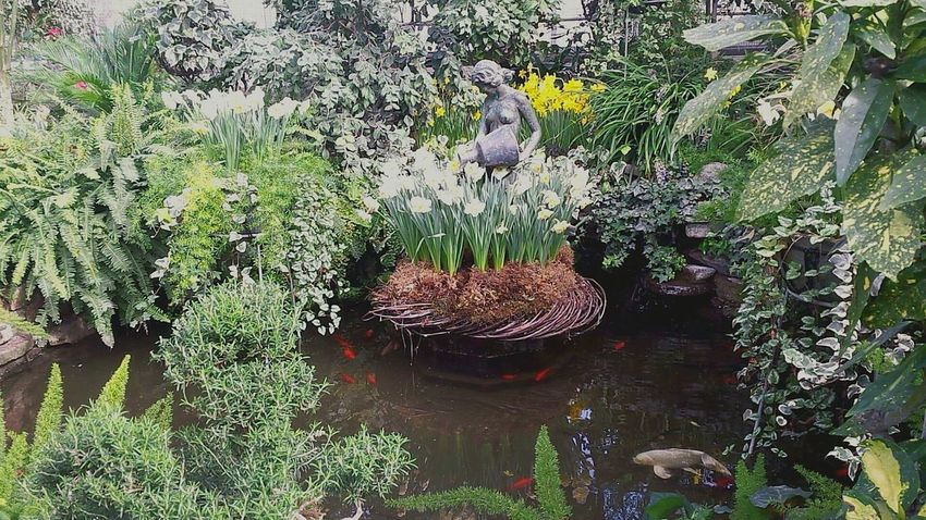 Koi Fish Pond Life Gardens