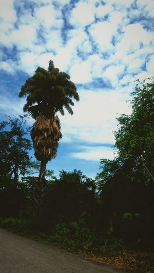 Tree Cloud - Sky Sky No People Nature Day Outdoors Beauty In Nature Palm Tree Nature Honduras Hn Tree Sky And Clouds