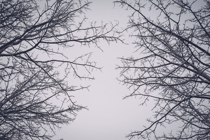 Bare Tree Beauty In Nature Branch Day Gloomy Day Low Angle View Nature No People Outdoors Scenics Sky Tranquility Tree