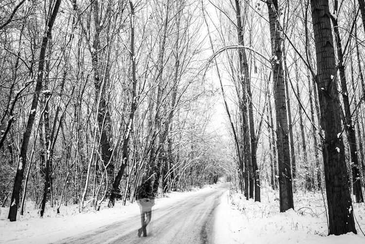 One Person Snowing Treelined Diminishing Perspective WoodLand Non-urban Scene Tranquility Covering Forest Direction Tree Trunk The Way Forward Trunk Bare Tree Road Winter Snow Cold Temperature Outdoors Nature Beauty In Nature Plant Land Tree Black And White