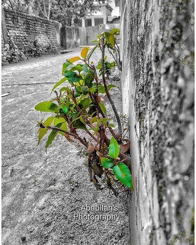 Green Between Walls Growing Lilleafs HDR Follow4follow Like4like