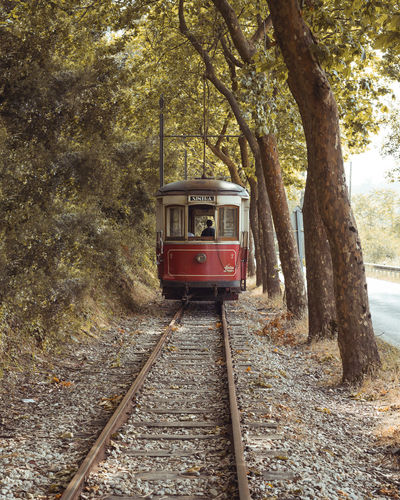 Train on railroad track in forest