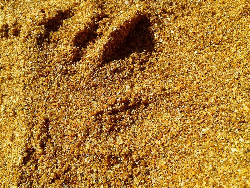 Full Frame Backgrounds Sand Day Beach Yellow Sunlight No People High Angle View Outdoors Pattern Nature Textured  Close-up Redsand Discovering Power In Nature Vacations Beauty In Nature Sea Patterns Grain Barley Corns Break The Mold Live For The Story Place Of Heart Sommergefühle Let's Go. Together. Neon Life