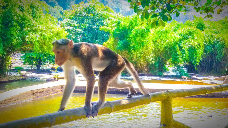 Athirappilly trip Cool Day kerala the gods own country ;) MonkeyForest Kerala Athirappilly Forest Riverbank Rock Trees Kerala Backwaters Sun ☀ Green Green Green!  Yellow Water .