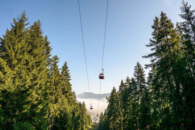 Low Angle View Of Overhead Cable Car Amidst Trees Against Sky