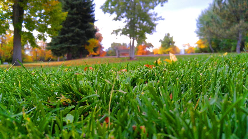 Growth Grass Green Color Tree Plant Selective Focus Nature Surface Level Beauty In Nature Tranquility Tranquil Scene Field Scenics Day Outdoors Sky Focus On Foreground Dew Green Grassy Check This Out BigSkyCountry Montanamoment Dramatic Angles Perspectives On Nature