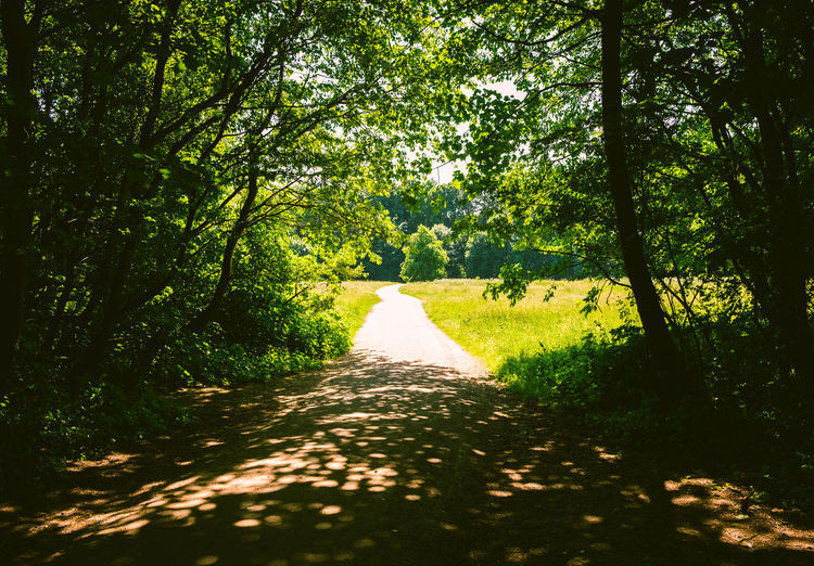 View of trail along trees in forest