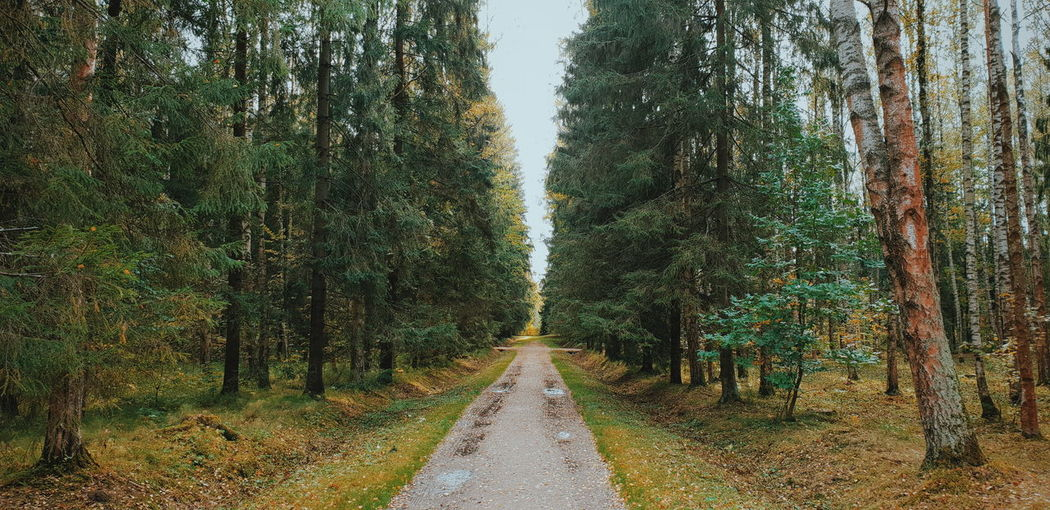 Withgalaxy снятонаgalaxy Saint Petersburg Санкт-Петербург Tree Straight Diminishing Perspective Sky Green Color Landscape Treelined Empty Road Country Road The Way Forward Woods Tree Trunk Long Pathway Walkway A New Beginning A New Perspective On Life