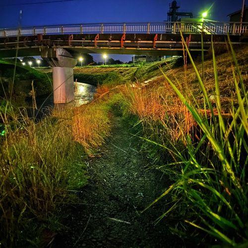 Illuminated bridge over grass in city at night
