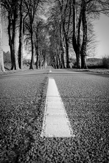 Road The Way Forward Trees Alley On The Road Tranquil Scene Alleyway Street Blackandwhite Black & White Black And White