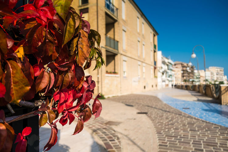 Ortona, Italy, Passeggiata Orientale Architecture Blue Building Built Structure City City Life Close-up Day Focus On Foreground Leaves Nature No People Old Town Outdoors Part Of Red Leaves Selective Focus Sky Sunlight Sunny Sunny Day