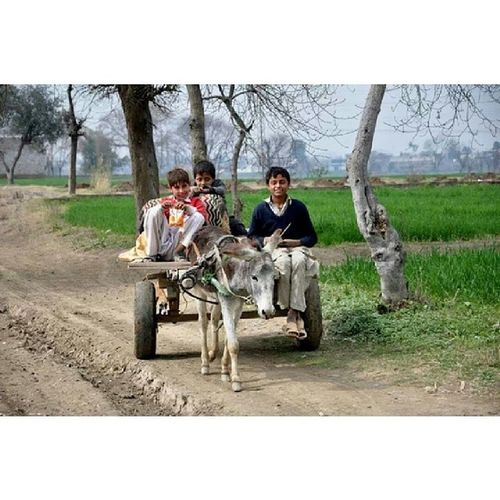 The childhood dream ride in our open fields Countryside Village DonkeyCart Childrens Fields GreenPark greenry Trees Colors BlueSky FunTime FunDay DayOff Mardan KhyberPakhtoonkhawa KP KPK Pakistan