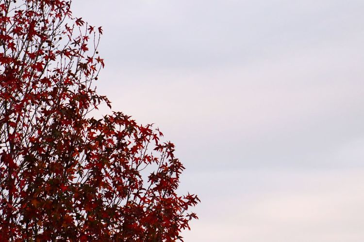 Low angle view of autumnal tree against sky