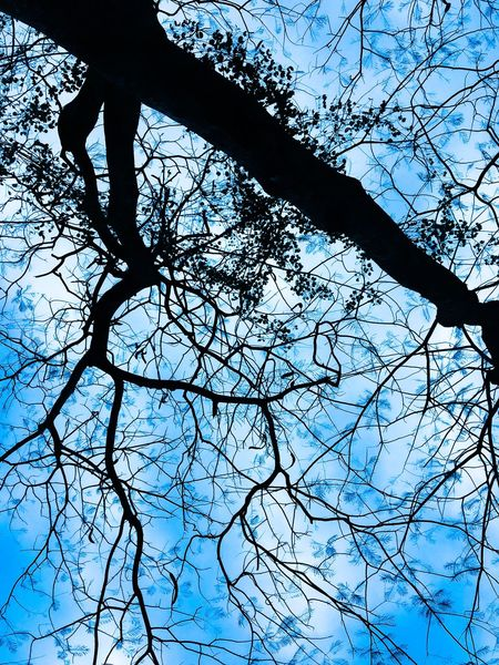 Tree Porn Silhouette Art Winter Winter Trees Death The Blue Sky Clouds And Sky Withered  Broken Heartbroken Lonely Fragility Showcase: February Emptiness