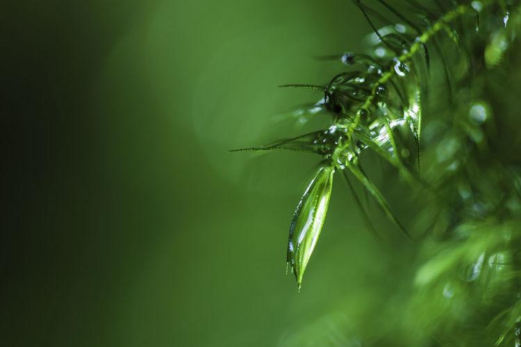 Close up a drop
