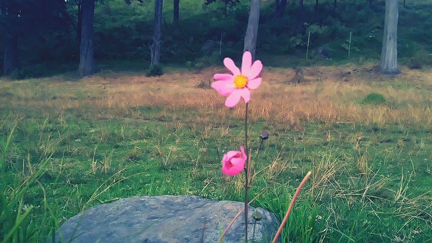 Solita Flowers Garden Flower Flower Collection Flowers,Plants & Garden Bonita Lerma Toluca ❤️ Ocoyoacac Secret Garden Gardens Garden Photography Gardening Toluca ,