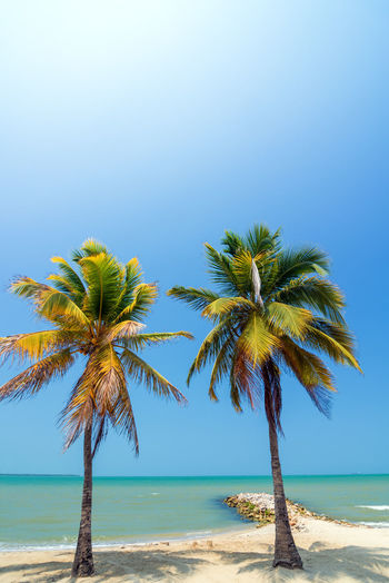 Two palm trees on a beautiful white Caribbean beach near Covenas, Colombia America Beach Beautiful Blue Caribbean Coast Colombia Coveñas Day Landscape National Park Nature Nature Outdoors Palm Scenic Sea South Sucre Tolu Tourism Travel Tree Tropical Water