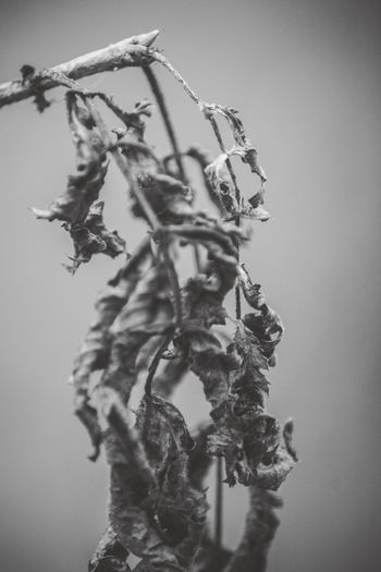 Macro Zoom Plant Growth Close-up Nature Beauty In Nature No People Plant Part Flower Leaf Flowering Plant Day Freshness Vulnerability  Focus On Foreground Selective Focus Outdoors Tree Fragility Branch Dry Wilted Plant EyeEm Nature Collection monochrome photography Black And White