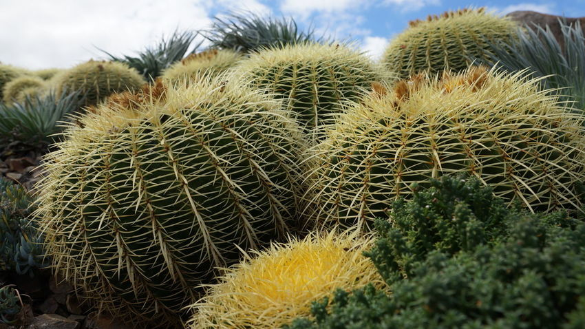Cactus Green Color Natural Pattern Plant Shyraphotography Spiked Thorn