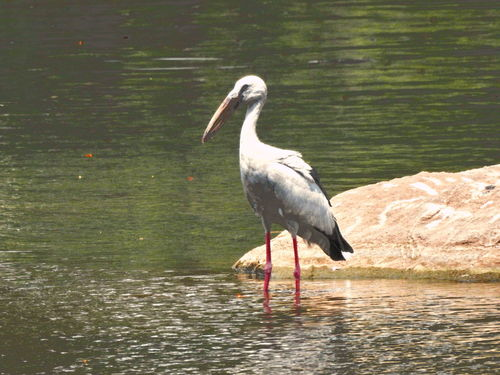 Animal Themes Animals In The Wild Beak Beauty In Nature Bird Day Freshwater Bird Grey Heron  Heron Lake Nature No People One Animal Outdoors Side View Tranquility Water Water Bird Waterfront Wetland Wildlife Zoology