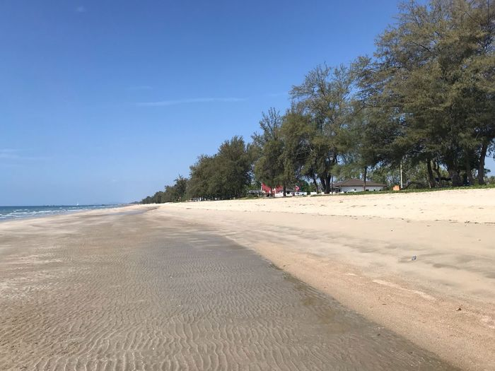 Tree Land Beach Sky Plant Sand Water Tranquil Scene Scenics - Nature Incidental People Tranquility Nature Sea Beauty In Nature Day Outdoors Sunlight Growth Blue