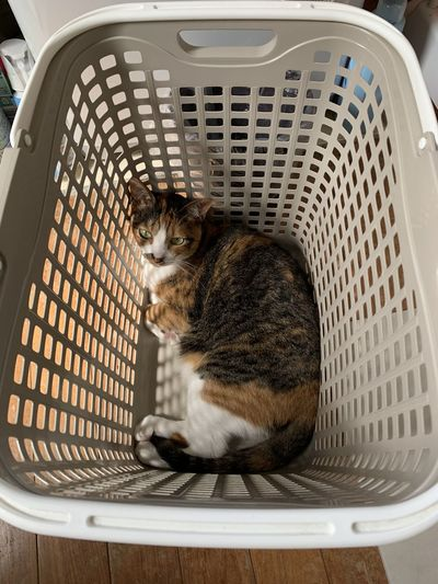 High angle view of cat sitting in basket