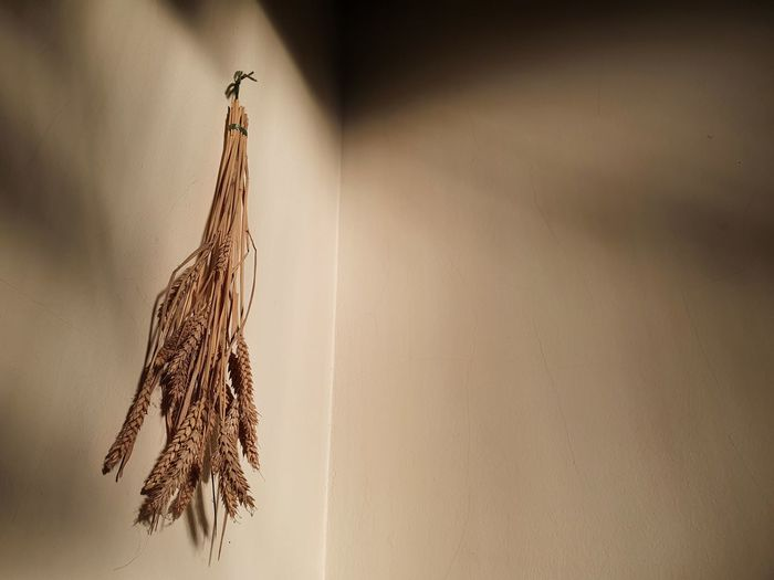 Close-up of dry bird hanging against wall
