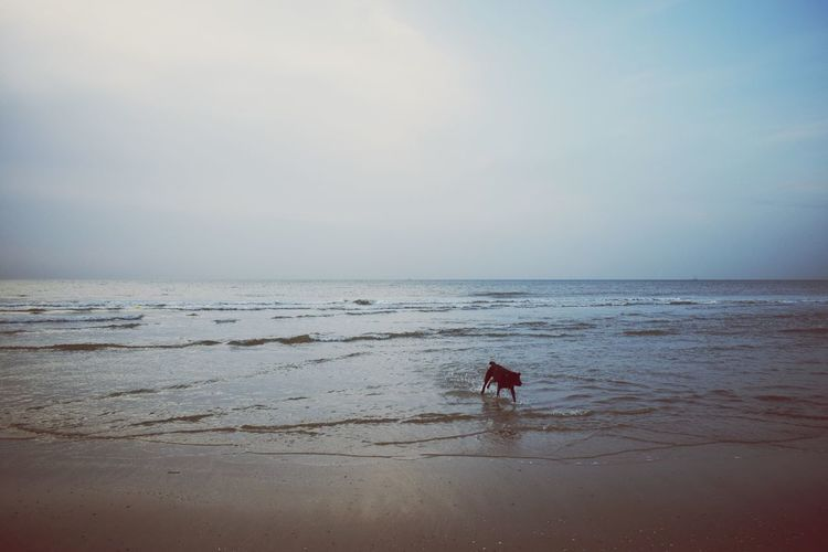 Nature Outdoors EyeEmNewHereChocolatelab Goodboy Dog Pets Lanscape Labrador Chcolatelab Sky Animal Themes No People Brownie Sea Beach Skye Water Day Horizon Over Water Katwijk Aan Zee Netherlands Nordsee Lost In The Landscape
