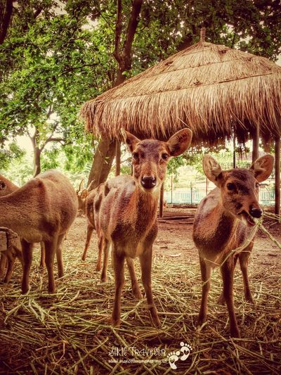 Close with the nature EyeEm Nature Lover EyeEm Animal Lover Animals Faces Of EyeEm