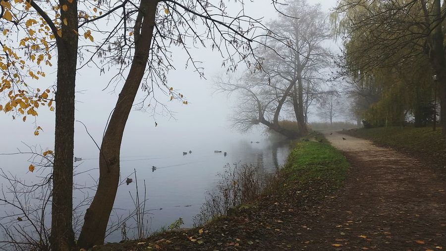 Fog Foggy