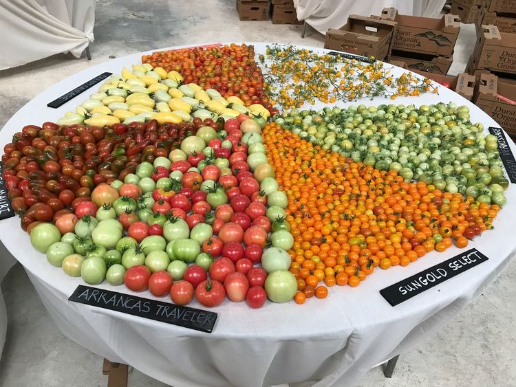 Pure Food Abundance Healthy Eating Freshness Multi Colored No People Heirloom Expo Heirloom Tomatoes Chemical Free No Gmo  Tomato