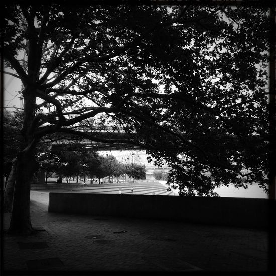 TreePorn Blackandwhite Monochrome Hipstamatic