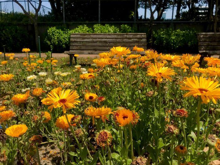 Flower Flowering Plant Plant Freshness Growth Fragility Vulnerability