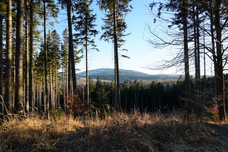 Forest Harz