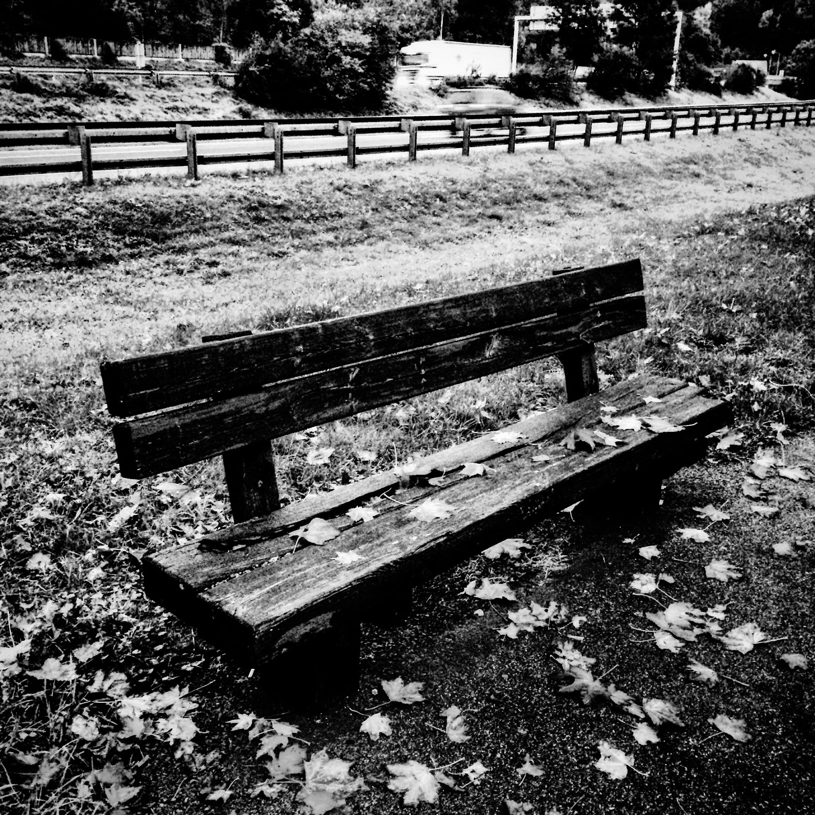 bench, tree, wood - material, park bench, park - man made space, tranquility, empty, absence, nature, wooden, park, grass, tranquil scene, day, outdoors, seat, sunlight, wood, field, no people