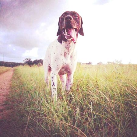 Picturing Individuality Green Green Grass Of Home Tongueouttuesday Gsp Country Road