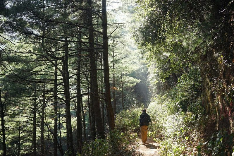 Rear view of man with backpack walking amidst trees in forest